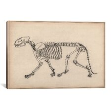 Animal Art 'Tiger Skeleton Anatomy Drawing' Painting Print on Canvas