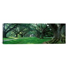 Panoramic Louisiana, New Orleans, Oak Alley Plantation, Plantation Home through Alley of Oak Trees Photographic Print on Canvas