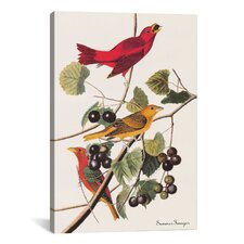 'Summer Tanager' by John James Audubon Painting Print on Canvas