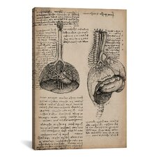 'Sketchbook Studies of Human Organs' by Leonardo da Vinci Painting Print on Canvas
