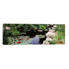 Panoramic Water Lilies in a Pond, Sunken Garden, Olbrich Botanical Gardens, Madison, Wisconsin Photographic Print on Canvas