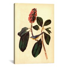 'Warbler' by John James Audubon Painting Print on Canvas