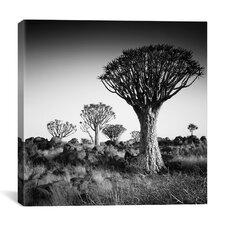 Namibia Quiver Trees Canvas Wall Art by Nina Papiorek