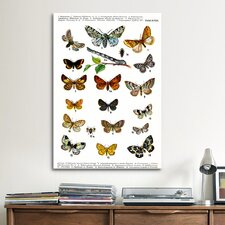Animal European Butterflies Graphic Art on Canvas