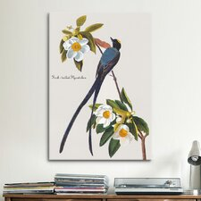 'Fork-tailed Flycatcher' by John James Audubon Painting Print on Canvas