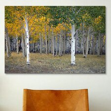 'Dixie Forest, Utah' by J.D. McFarlan Photographic Print on Canvas