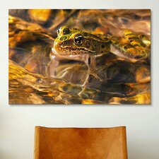 'Frog' by Gordon Semmens Photographic Print on Canvas