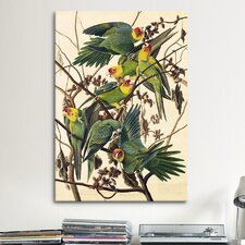 'Carolina Parrot' by John James Audubon Painting Print on Canvas