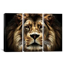 Photography SD Smart The Lion 3 Piece on Canvas