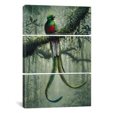 Harro Maass Resplendent Quetzal 2 3 Piece on Canvas Set