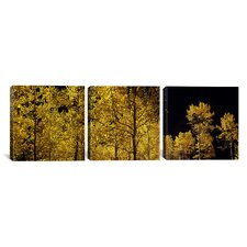 Photography Aspen Trees in Autumn Colorado, USA 3 Piece on Canvas Set