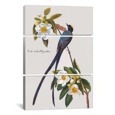 John James Audubon Fork-Tailed Flycatcher 3 Piece on Canvas Set