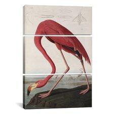 John James Audubon Flamingo Drinking At Water's Edge 3 Piece on Canvas Set