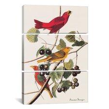 John James Audubon Summer Tanager 3 Piece on Canvas Set