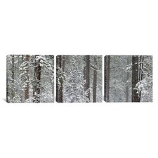 Photography Snow-Covered Ponderosa Pine Trees in Indian Ford, Oregon 3 Piece on Canvas Set