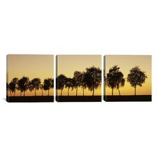 Photography Tree Alley at Sunset Hohenlohe, Baden-Wurttemberg, Germany 3 Piece on Canvas Set