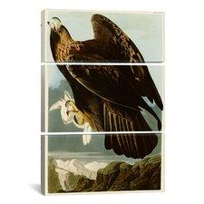 John James Audubon Golden Eagle 3 Piece on Canvas Set