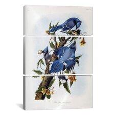 John James Audubon Blue Jay 3 Piece on Canvas Set