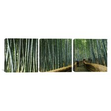 Photography Bamboo Forest