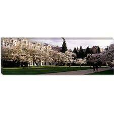 Cherry Trees in the Quad of a University, University of Washington, Seattle, King County, Washington State Canvas Wall Art