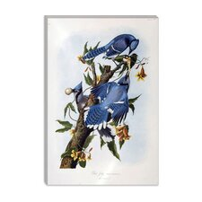 "<strong>iCanvasArt</strong> ""Blue Jay"" Canvas Wall Art by John James Audubon"