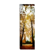Volunteer Park, Capitol Hill in King County, Washington Canvas Wall Art