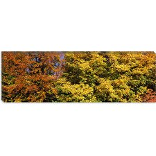 Ludwigsburg Park in Baden-Wurttemberg, Germany Canvas Wall Art