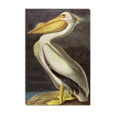 """American White Pelican"" Canvas Wall Art by John James Audubon"