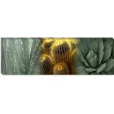 <strong>iCanvasArt</strong> Cactus Plants Canvas Wall Art