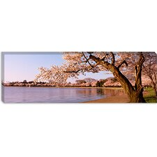 Cherry Blossom Tree Along a Lake, Potomac Park, Washington, D.C Canvas Wall Art