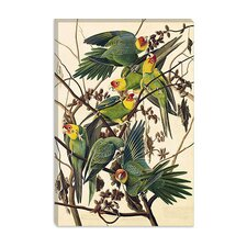 """Carolina Parrot"" Canvas Wall Art by John James Audubon"
