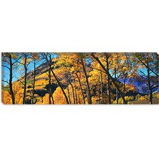 Maroon Bells, Elk Mountains, Pitkin County Canvas Wall Art