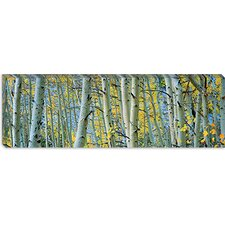 <strong>iCanvasArt</strong> Aspen Trees in a Forest, Rock Creek Lake, California, USA Canvas Wall Art