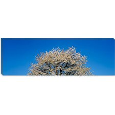 <strong>iCanvasArt</strong> Cherry Blossoms, Switzerland Canvas Wall Art