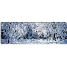 Winter, Forest, Yosemite National Park, California Canvas Wall Art