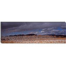<strong>iCanvasArt</strong> Flock of Snow Geese Flying at Bosque Del Apache National Wildlife Reserve, New Mexico Canvas Wall Art