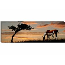 Horse Mare and a Foal Grazing by Tree at Sunset Canvas Wall Art