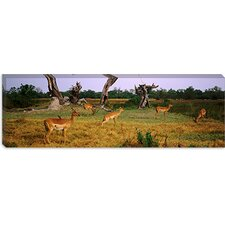 <strong>iCanvasArt</strong> Herd of Impalas Grazing in Moremi Wildlife Reserve, Botswana Canvas Wall Art