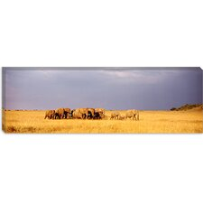 Elephant Herd, Maasai Mara Kenya Canvas Wall Art