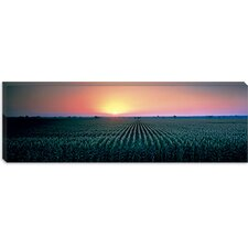 <strong>iCanvasArt</strong> Corn Field at Sunrise Sacramento Country, California Canvas Wall Art