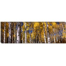 <strong>iCanvasArt</strong> Forest, Grand Teton National Park, Teton County, Wyoming Canvas Wall Art