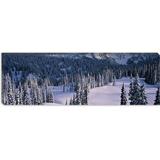 Fir Trees, Mount Rainier National Park, Washington State Canvas Wall Art