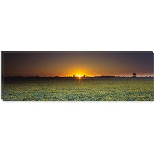 <strong>iCanvasArt</strong> Field of Safflower at Dusk, Sacramento, California Canvas Wall Art