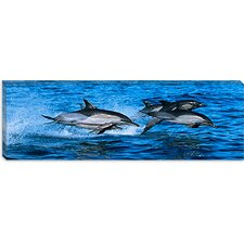 Common Dolphins Breaching in the Sea Canvas Wall Art