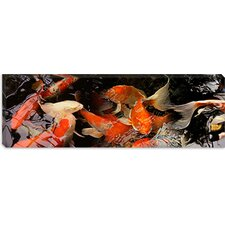 <strong>iCanvasArt</strong> Koi Carp Canvas Wall Art