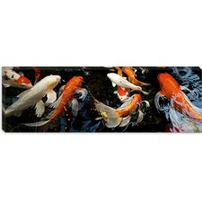 <strong>iCanvasArt</strong> Koi Carp Swimming Underwater Canvas Wall Art