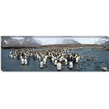 <strong>iCanvasArt</strong> King penguins at St Andrews Bay, South Georgia Island Canvas Wall Art