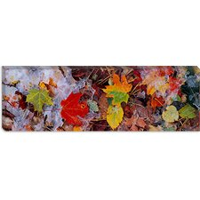 Frost on Leaves, Vermont Canvas Wall Art