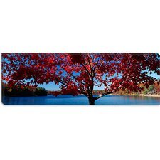 Close-up of a Tree, Walden Pond, Concord, Massachusetts Canvas Wall Art