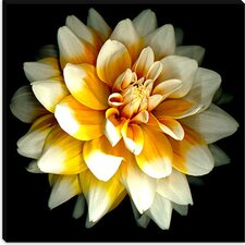 """Dahlia"" Canvas Wall Art by Susan Barmon"
